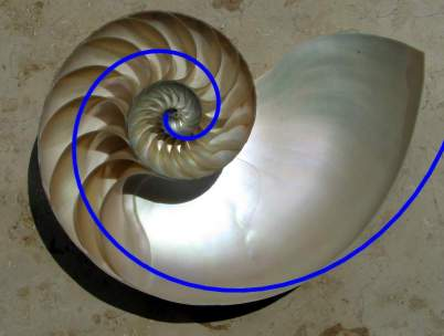 Nautilus with golden spiral