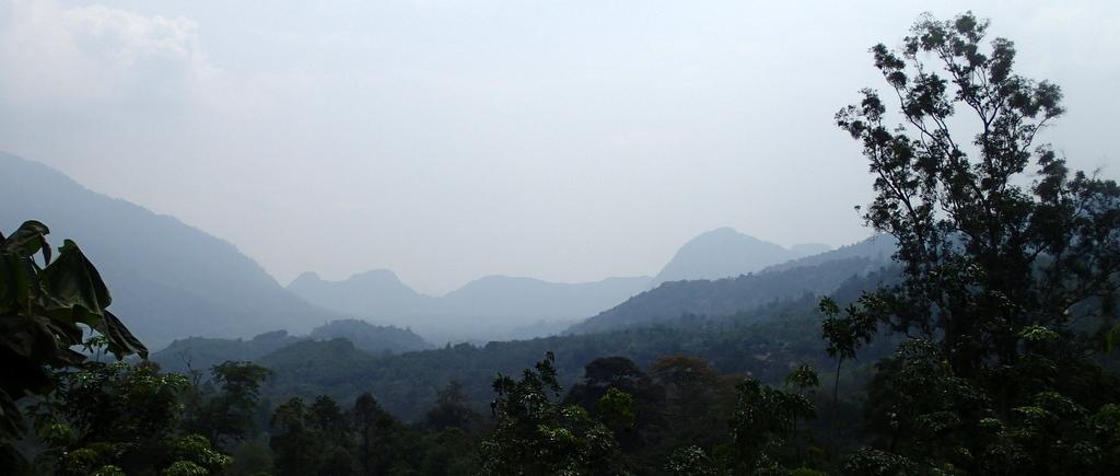 Dipang jungle