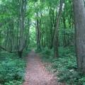 Pilgrim Path