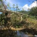 Iskandar bridge
