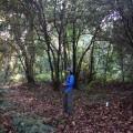 On the Green Ridge