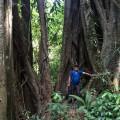 Impressive trees