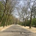 The sycamore avenue