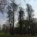 Impressive old trees