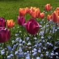 Their garden