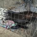 Their pet procupine