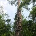 Makeshift ladder