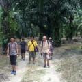Through a plantation