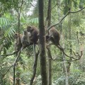 Nice monkey family