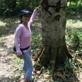 Suat loves trees