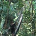 Beautiful suspension bridge