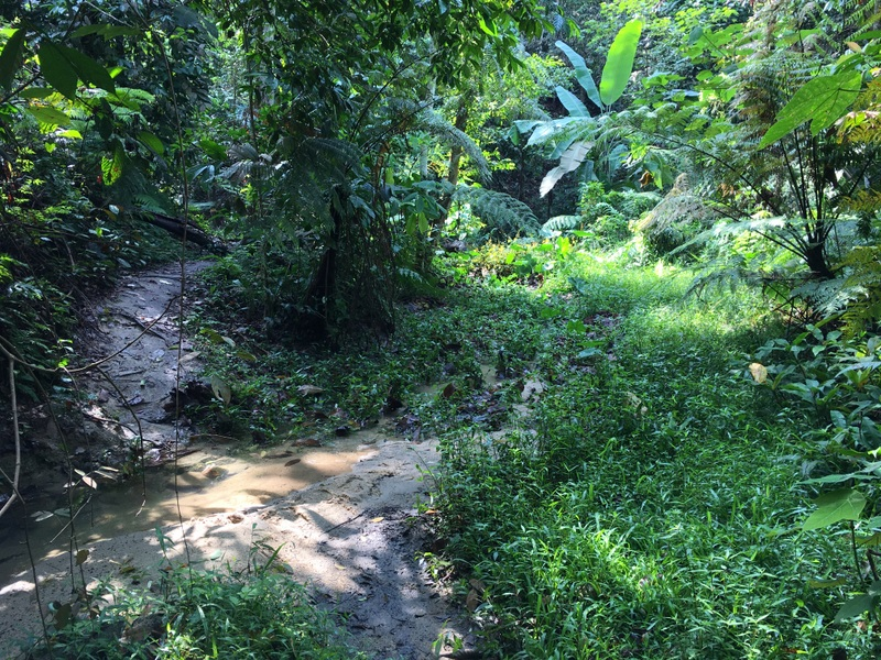 Penchala stream