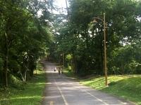 Kiara tar road
